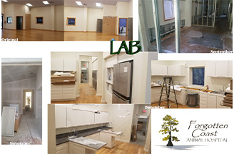 Lab- Before & After